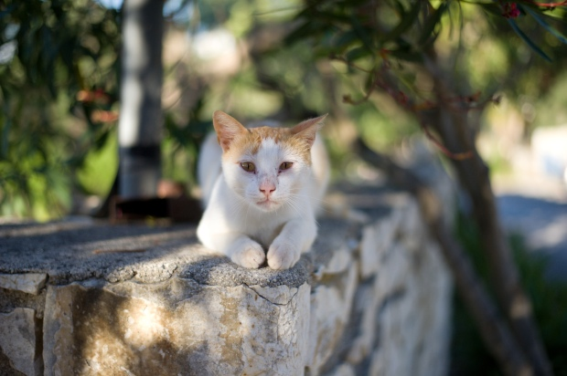 Paxos Cats