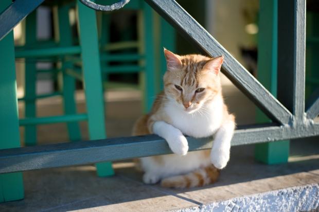 Paxos Cats